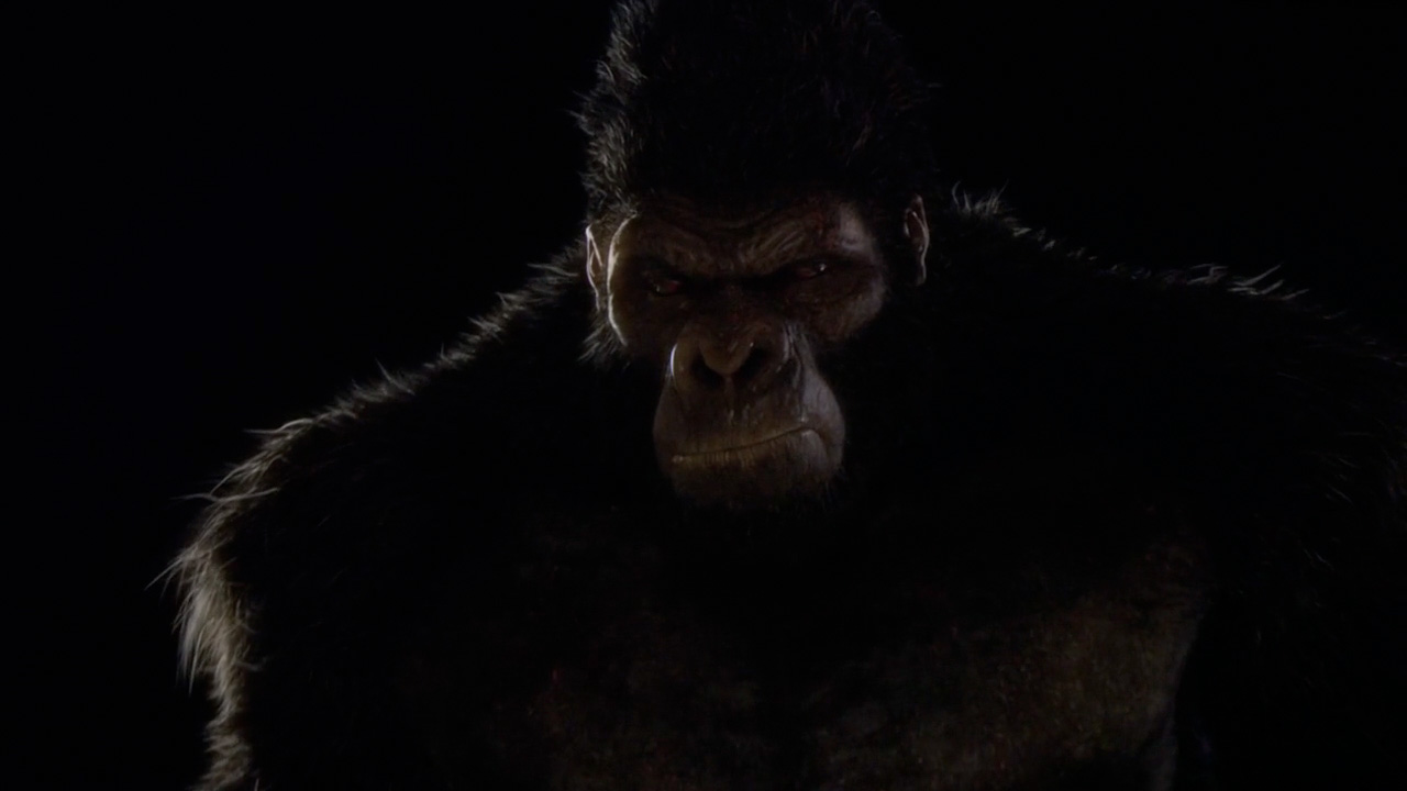 Grodd in 'Gorilla Warfare'